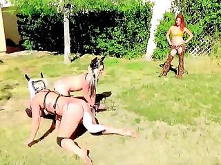 Horse increased by Doggy Jockey